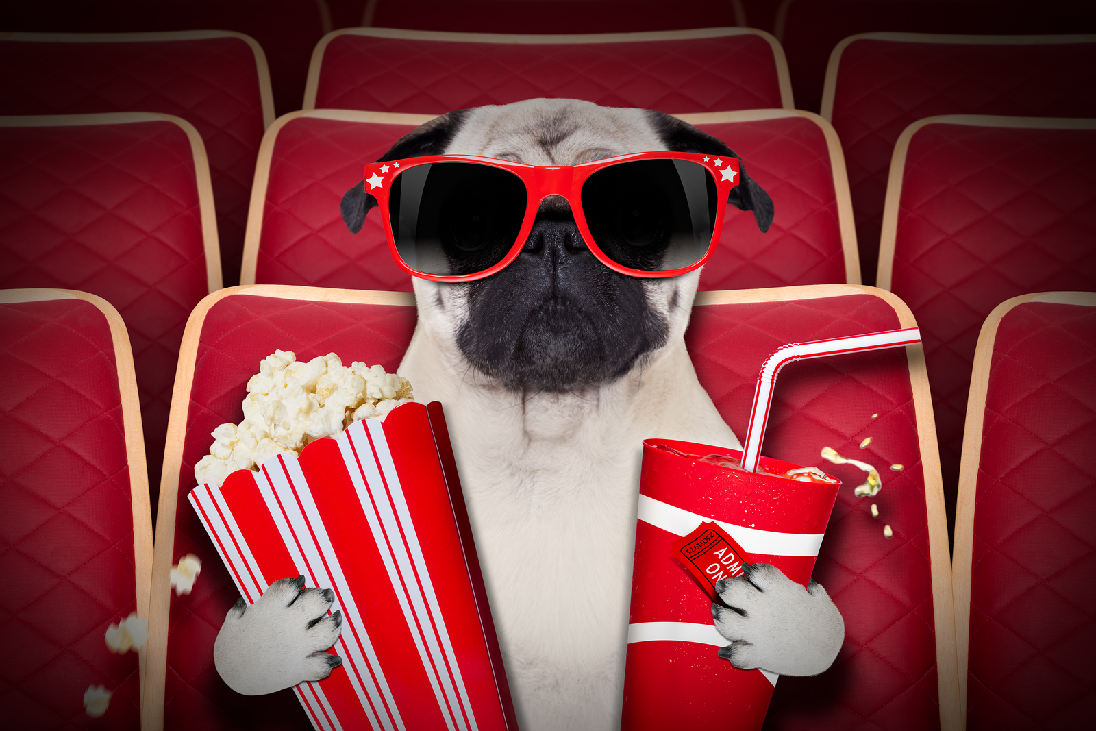North Wales Gets Dog-Friendly Cinema